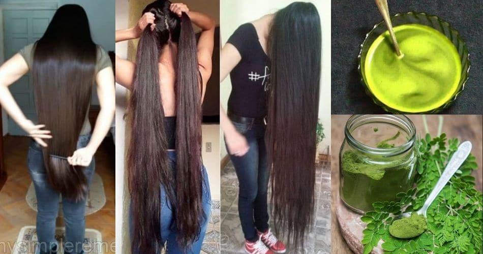 સામાન્ય દેખાતા આ પાંદડા ખરતા વાળ અટકાવી બનાવી દેશે એકદમ મજબૂત, જાણી લો લગાવવાની રીત. મોંઘા શેમ્પુ ક્રીમના ખર્ચા બચી જશે…